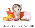 Funny little Scottish kitten takes a bath over white 76575987