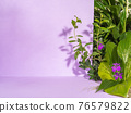 Creative botanical scene for product demonstration. 76579822