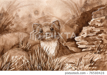 Wild weasel in the forest. Watercolor illustration. Wildlife animal by the log. European brown stoat. Small fur europe predator. Wild weasel staring from the hole image 76580428
