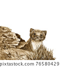 Wild weasel in the forest. Watercolor illustration. Wildlife animal by the log. European brown stoat. Wild weasel staring from the hole image. Small fur europe predator. On white background 76580429
