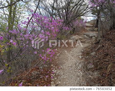 북한산.국립공원.봄꽃.나뭇잎.탐방로  76583852