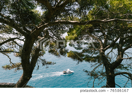 A white boat with a cheerful company of young people floats on the sea, top view through tall coniferous trees. 76586167