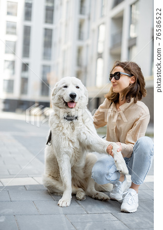 Woman walking with her big white dog on the street 76586522
