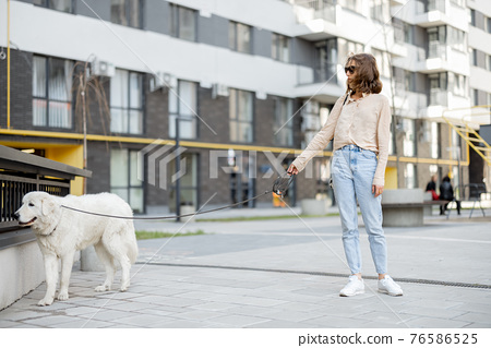 Woman walking with her big white dog on the street 76586525