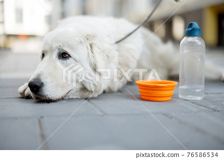 Dog lying on the ground near a bowl of water 76586534