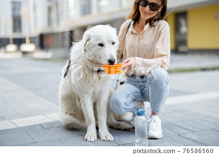 Woman gives a water in a bowl to her dog 76586560