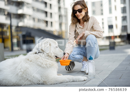 Woman gives a water in a bowl to her dog 76586639