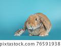 Lop ear rabbit on turquoise background 76591938
