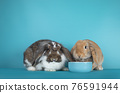 Lop ear rabbit on turquoise background 76591944