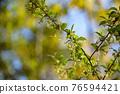 銀果胡頹子 野生橄欖 花朵 76594421
