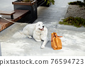 Happy friendly white dog lying on the ground 76594723