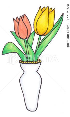 infant, tulipa, flower 76594978