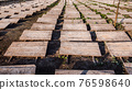 Snail farm - wooden canopies stand on the field to protect against the sun and heat 76598640