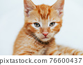 Cute ginger kitten sits of sofa 76600437