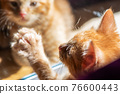 Cute ginger kitten plays with reflection 76600443