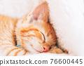 Cute ginger kitten sleeps 76600445