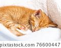Cute ginger kitten sleeps 76600447