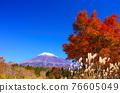 富士山 楓樹 紅楓 76605049