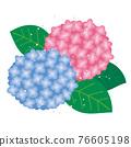 繡球花 下雨 雨 76605198