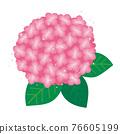 繡球花 矢量 植物 76605199