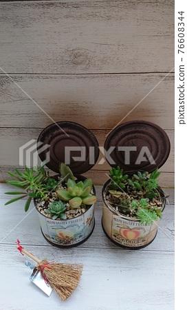 다육 식물, 식물, 통조림 76608344