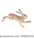 Hare running. Rabbit wild northern forest animal. Cartoon character of a small mammal animal. A wild forest creature with gray fur. Side view. Vector flat illustration isolated on a white background 76609105