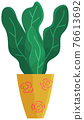 Decorative green plant with long leaves in ceramic pot, pot with houseplant. Home interior plant 76613692