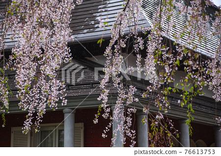 kakunodate, cherry blossom, cherry tree 76613753