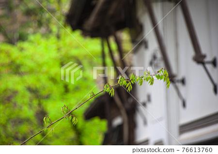 kakunodate, fresh verdure, tender green 76613760