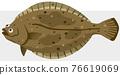 掙扎 比目魚 魚 76619069