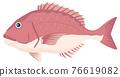 鯛魚 鯛 真鯛 76619082
