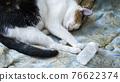 Home cat sleeps near banoki with pills. Insomnia concept 76622374
