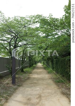Green cherry blossom road 76623151