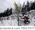 chemical treatment of woody plants 76627077