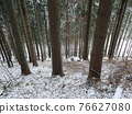 tree marked for mining 76627080