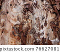 Tree damage by insects 76627081