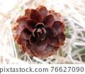 spruce cones - background 76627090