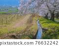 鵜山의 벚꽃길 76632242