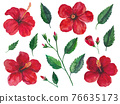Watercolor illustration of hibiscus flowers, branches with leaves and buds isolated on white background. 76635173
