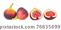 fig on white background 76635699