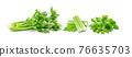 Celery on white background 76635703