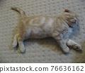 Sleeping kitten 76636162