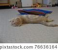 animal, animals, cat 76636164