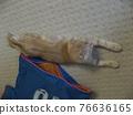 animal, animals, cat 76636165