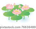 蓮花 植物 植物學 76636489