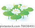蓮花 植物 植物學 76636491
