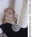 Standing kitten 76636619