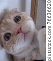Beautiful cat 76636620