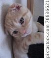 Kitten looking down 76636621