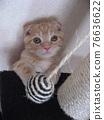 animal, animals, cat 76636622